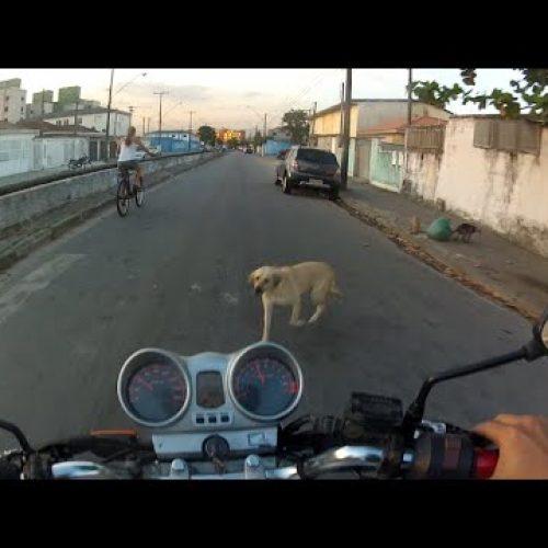 Motociclista sofre ferimentos após atropelar cachorro