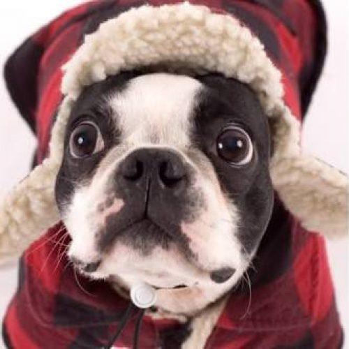 Cães e gatos também sofrem com as doenças de inverno