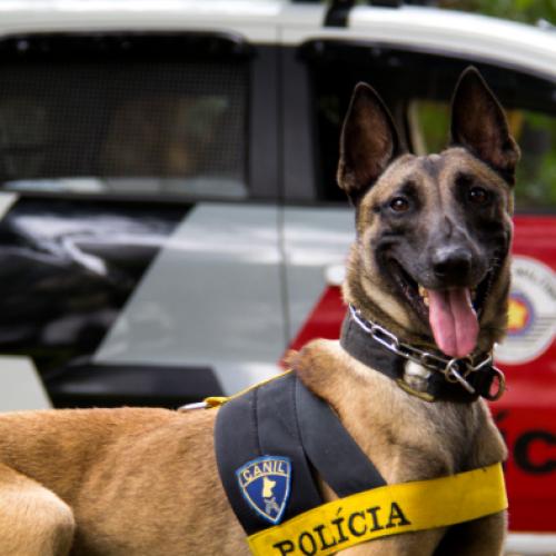 BARRETOS: Equipe do Canil apreende menor pelo crime de tráfico de drogas