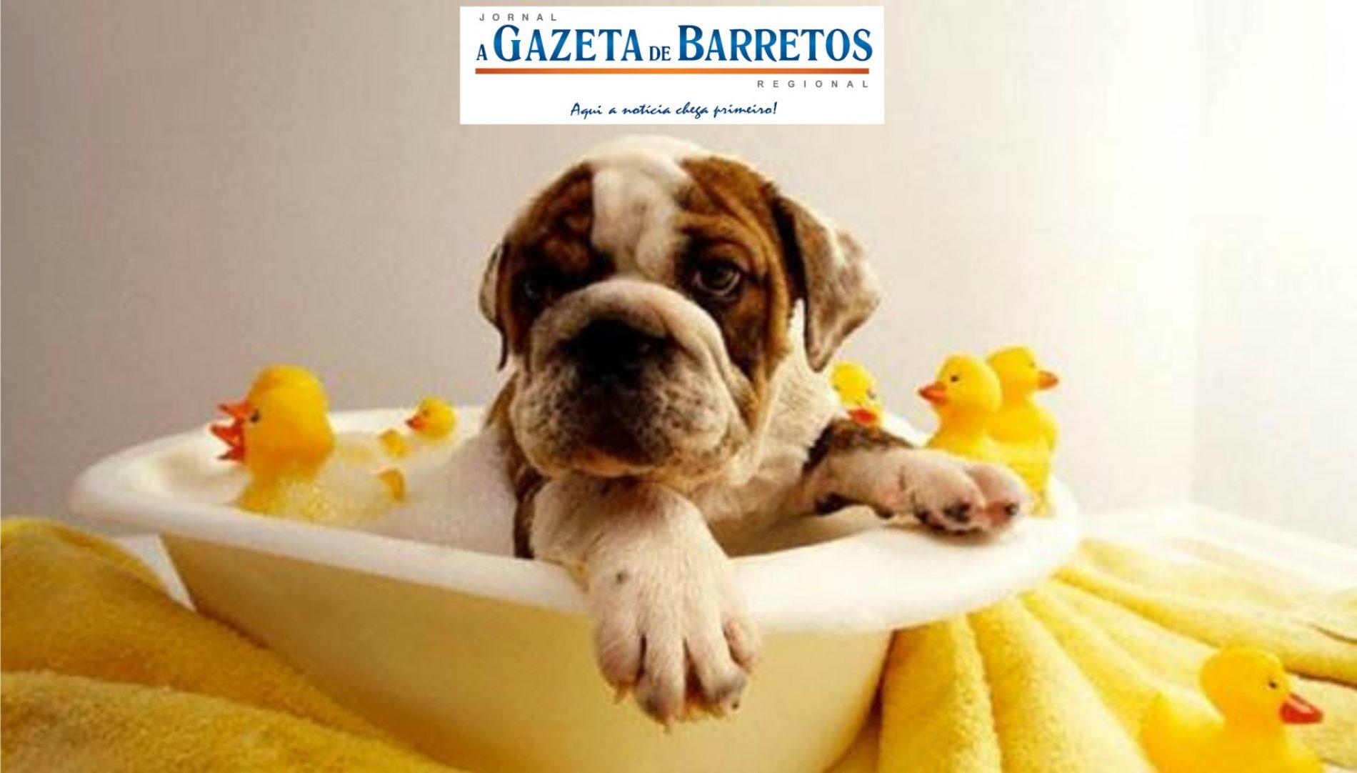 Pet também precisa de banho em clima frio