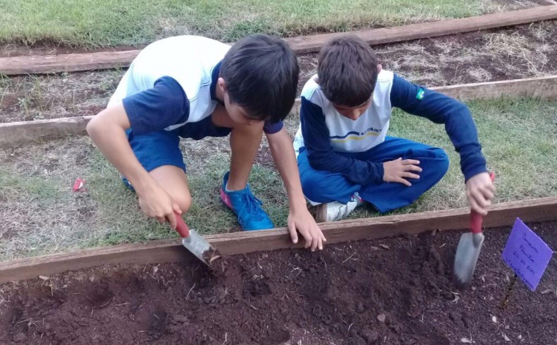 LIÇÃO PRA VIDA TODA: 5 lições da jardinagem para as crianças