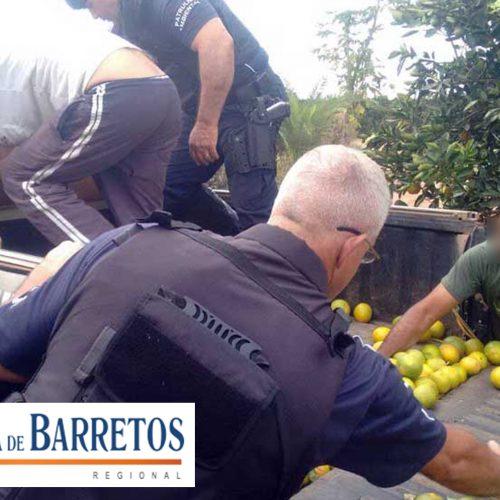 Servente é preso por furtar laranjas em fazenda