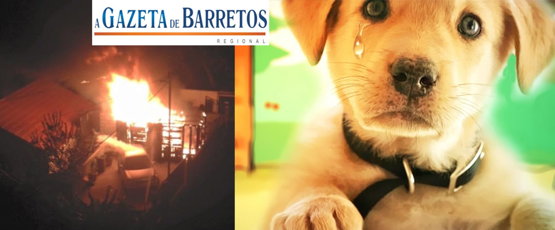 Homem morre após salvar cachorro de incêndio