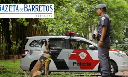 Canil e Força Tática apreendem menor, drogas e mais de R$1.300,00 em dinheiro