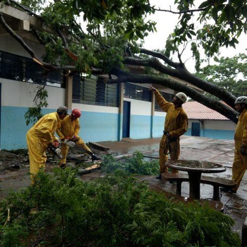 REGIÃO: Árvore atinge telhado de escola durante temporal