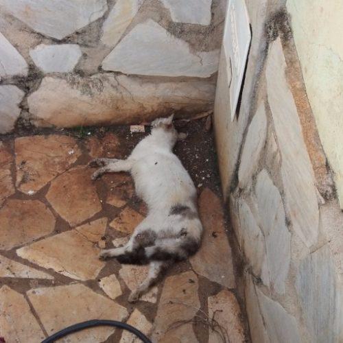 REGIÃO: Morte de gato na Vila Albertina vira caso de polícia em Ribeirão Preto