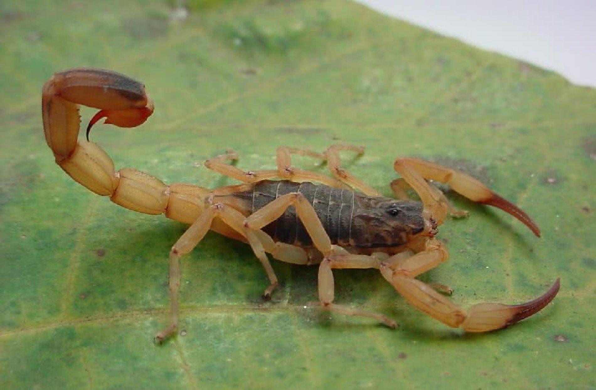 REGIÃO: Menina de 7 anos é picada por escorpião em área externa de escola