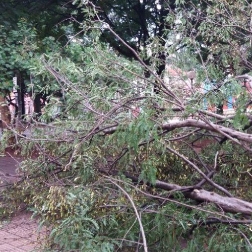 REGIÃO: Vento forte derruba cinco árvores na tarde do Dia de Natal