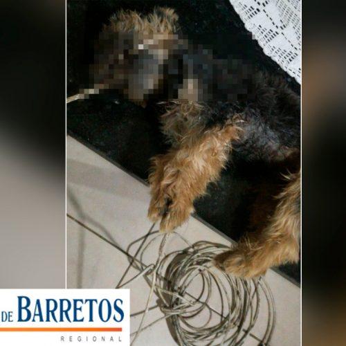 REGIÃO: Família encontra cachorro perfurado e enforcado por fio de antena