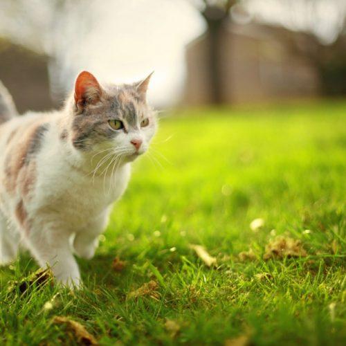ANIMAL: Quais os riscos e como evitar pneumonia em gatos