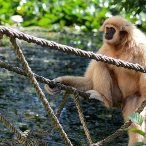 SÃO PAULO: Parques e zoológicos fecham após morte de macaco com febre amarela