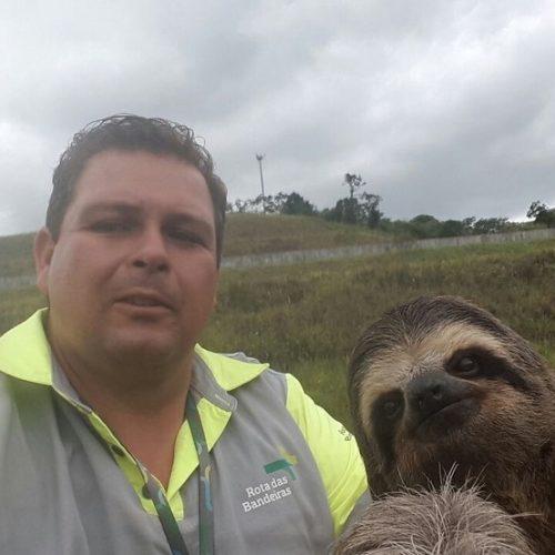 BRASIL: Bicho-preguiça 'faz selfie' com funcionário de concessionária de rodovia em Igaratá