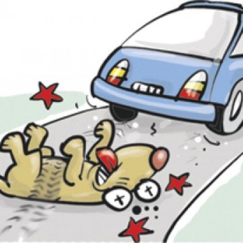 BARRETOS: Após atropelar cachorro, homem é agredido, ameaçado e cobrado em seu local de trabalho
