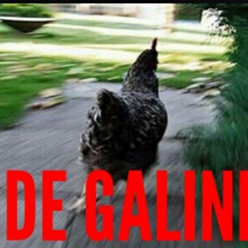 BARRETOS: Ladrões ameaçam idoso e furtam galinhas de sua criação