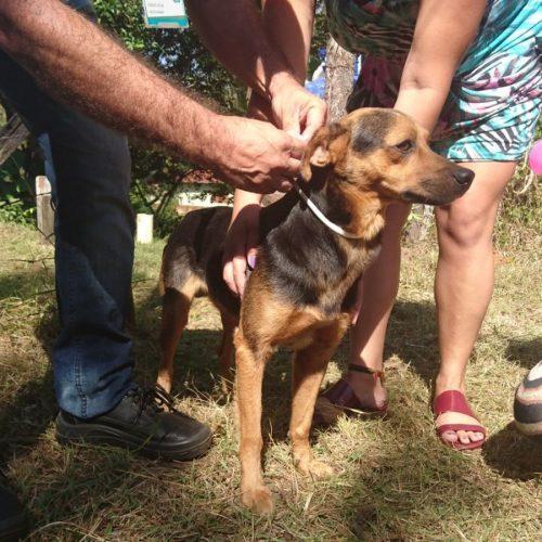 SAÚDE ANIMAL: Pesquisa tenta evitar eutanásia em cães com leishmaniose ganha apoio da Nasa