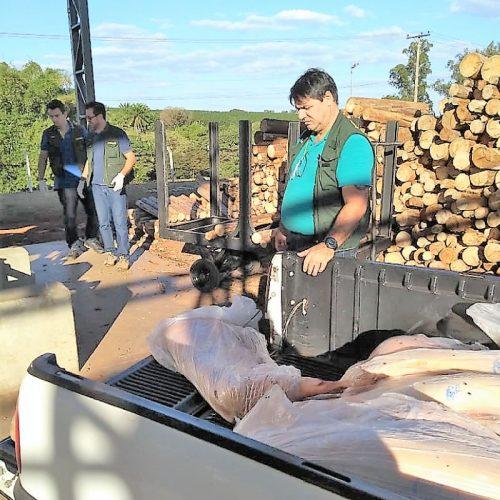 BARRETOS: Vigilância Sanitária incinera quase 600 quilos de carne de porco