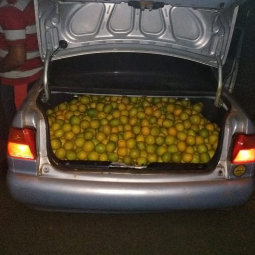 OLÍMPIA: Dois Homens são preso após furtarem laranjas