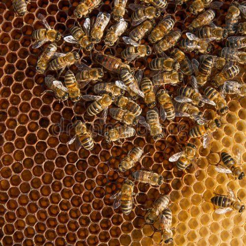 REGIÃO: Ataque de abelhas fere 15 estudantes em escola estadual