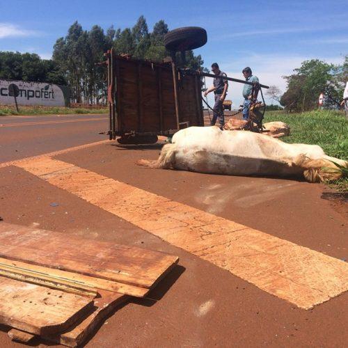 MIGUELÓPOLIS: Acidente deixou um carroceiro ferido e um animal morto.