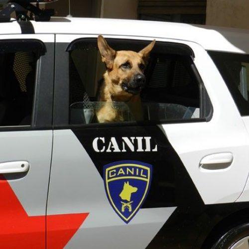 BARRETOS: Canil prende homem por tráfico e apreende drogas e dinheiro