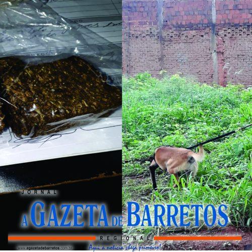 BARRETOS: Após tentar fuga com moto, homem é preso pela Equipe do Canil por tráfico de drogas