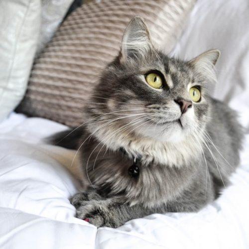 SAÚDE: Esporotricose pode ser transmitida dos gatos para os humanos por arranhões ou mordidas