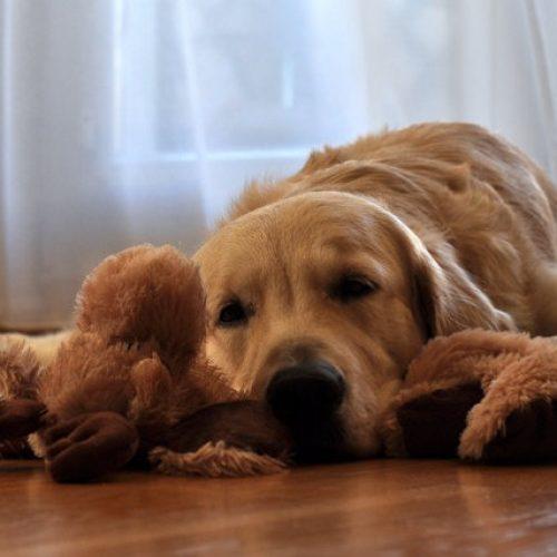 DICAS VALIOSAS:Dez dicas simples para resolver o medo de fogos de artifícios em cachorros