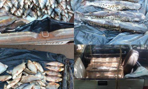 BARRETOS: Policia ambiental apreende dois carros, celulares e centenas de quilos de peixes no Reservatório Marimbondo