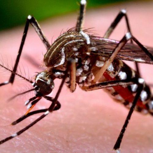 GUAÍRA: Com 29 casos confirmados, cidade, registra 1ª morte por suspeita de dengue