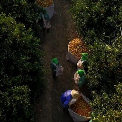 BEBEDOURO: Cidade demite 1,9 mil com fim da safra da laranja e é a 6ª que mais perde empregos no país