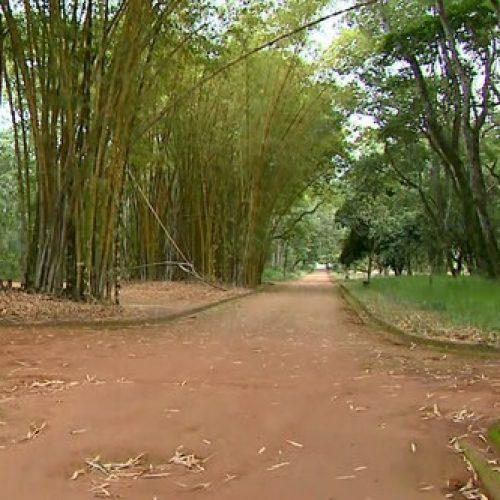REGIÃO: Polícia Civil investiga relação entre estupro e assassinato em bosque