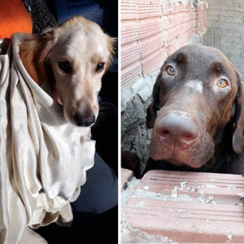BEBEDOURO: Cães se recuperam após serem resgatados com mutilações e desnutridos
