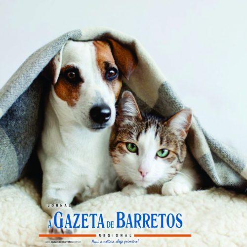 Cuidados com os pets durante o inverno