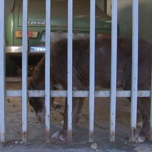 REGIÃO: Polícia Civil encontra animais com sinais de maus-tratos dentro de casa