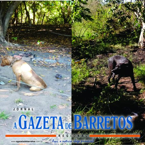 BARRETOS: Policia Ambiental localiza cães em estado de maus tratos e elabora multa