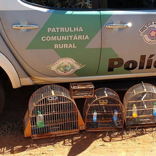 BARRETOS: Polícia Ambiental flagra homem com vários pássaros presos e sem autorização