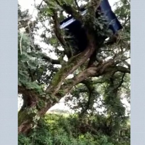 REGIÃO: Piscina voa durante temporal e vai parar em cima de árvore; veja o vídeo
