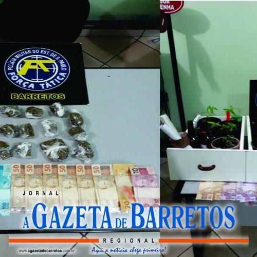 BARRETOS: Comerciantes são presos por tráfico de drogas e Policia apreende dinheiro e pés de maconha