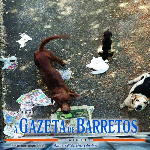 BARRETOS: Polícia apreende animais em estado de abandono em residência no Barretos II e aplica multa de 15 mil