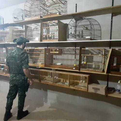 GUARACI: Polícia Ambiental apreende pássaros e aplica multa de mais de 650 mil ao infrator