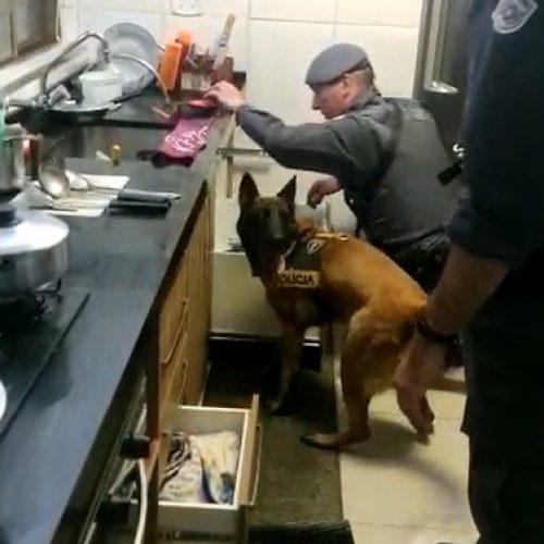 REGIÃO: Baep prende suspeito de tráfico após cão achar 5 kg de crack na casa dele